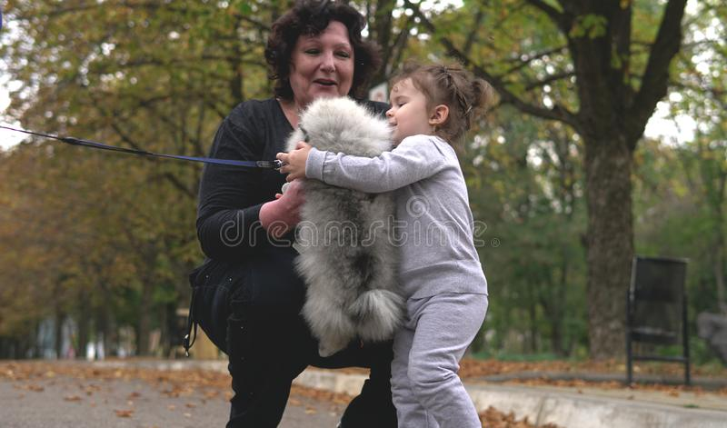 Grandmother and little granddaughter playing with litttle dog in park. Family, generation and people concept - happy smiling grandmother and little granddaughter stock image