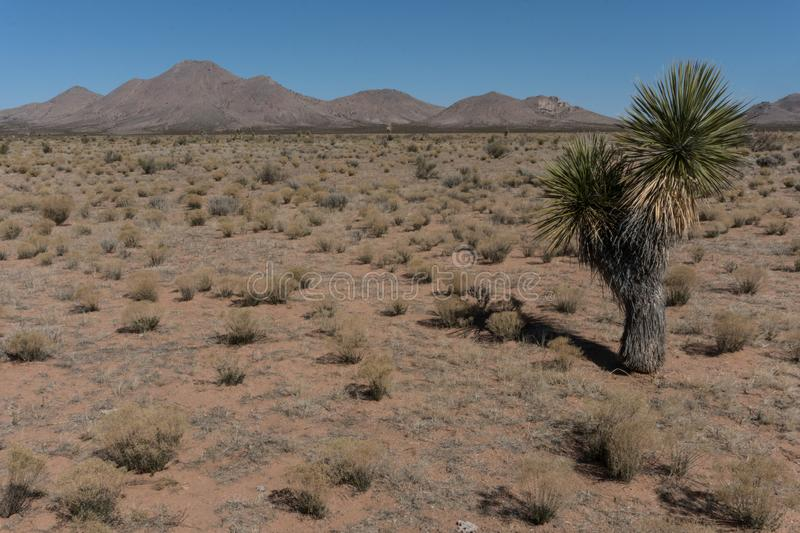 The Grandmother mountains area in New Mexico. The Grandmother Mountains area shows the arid nature of the desert in New Mexico royalty free stock photo