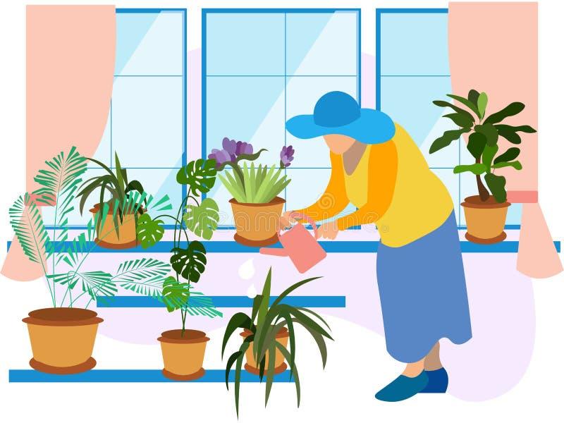 Grandmother, a pensioner watering indoor flowers. Winter garden, potted flowers. In minimalist style Cartoon flat Vector vector illustration