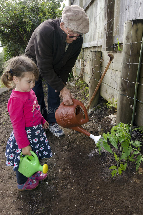 Grandpa и внучат засаживая завод томата стоковая фотография rf