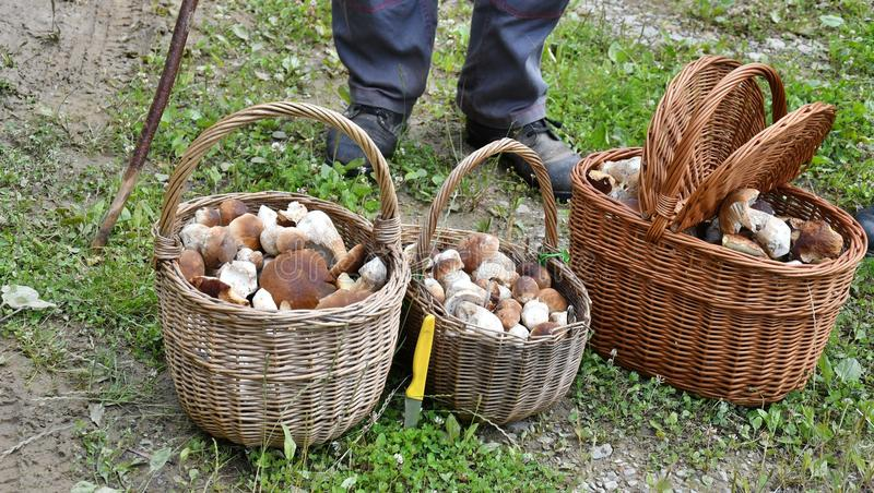 Grandparents with the basket of mushrooms after autumn mushrooming in the forest royalty free stock photography
