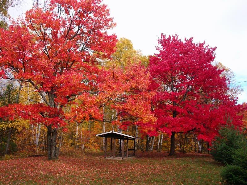 Grands arbres colorés image libre de droits