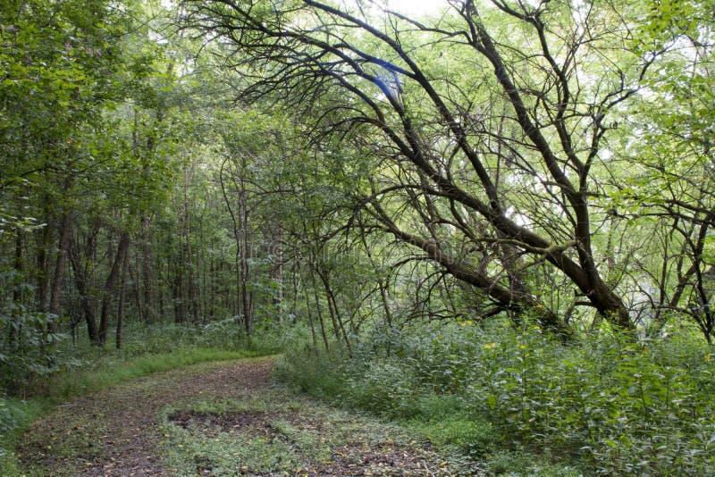 Grands arbres sur la berge photo libre de droits