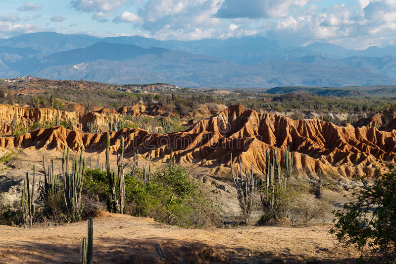 Grands cactus dans le désert rouge, désert de tatacoa, Colombie, latin Amer image libre de droits