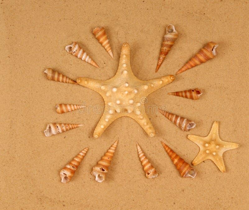 Grands coquillages sur le sable images stock