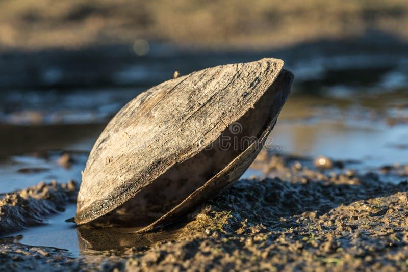 Grands mollusques et crustacés sur le lac photo libre de droits