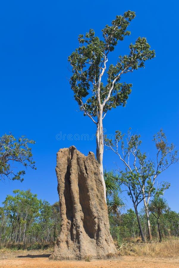 Grands monticules de termite de cathédrale photos stock