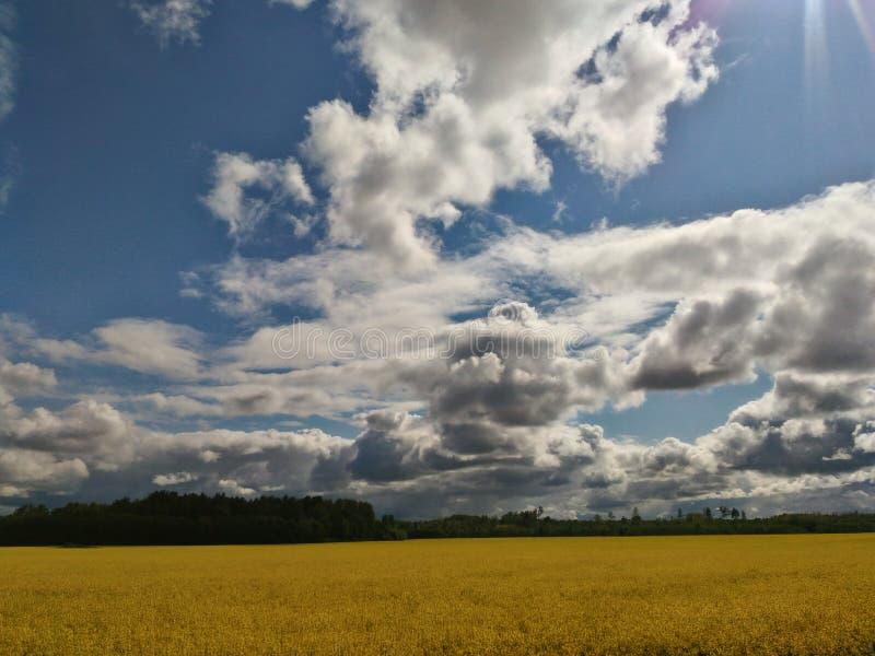 Grands nuages blancs de champ jaune de viol image stock