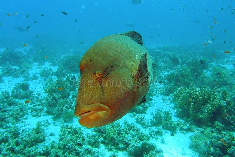 Grands poissons photos stock
