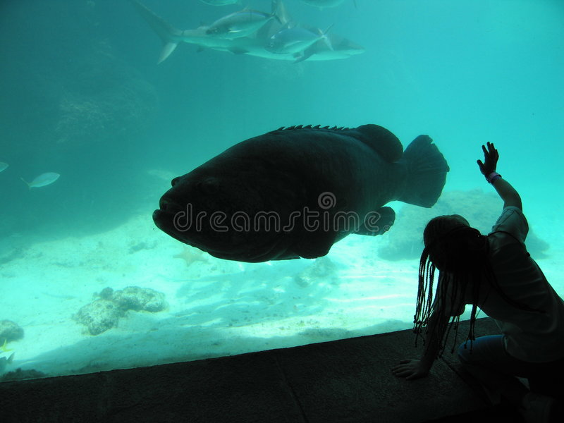 Grands poissons ! image stock