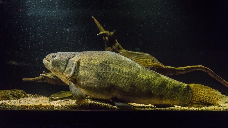Grands poissons dans le musée photo stock