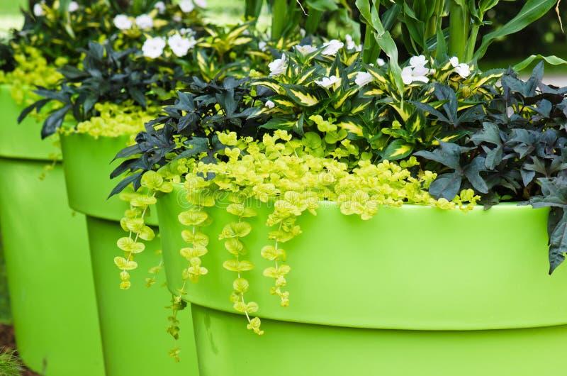 grands pots d 39 usine avec des fleurs dans le jardin photo stock image du floral jardin 34554894. Black Bedroom Furniture Sets. Home Design Ideas