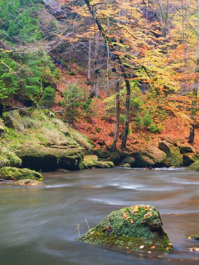 Grands rochers avec les feuilles tombées Berges de montagne d'automne Gravier et rochers moussus verts frais sur des banques avec photos libres de droits