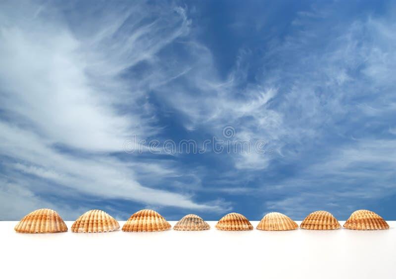 Grands seashells photographie stock libre de droits