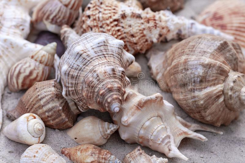 Grands seashells sur le sable images stock