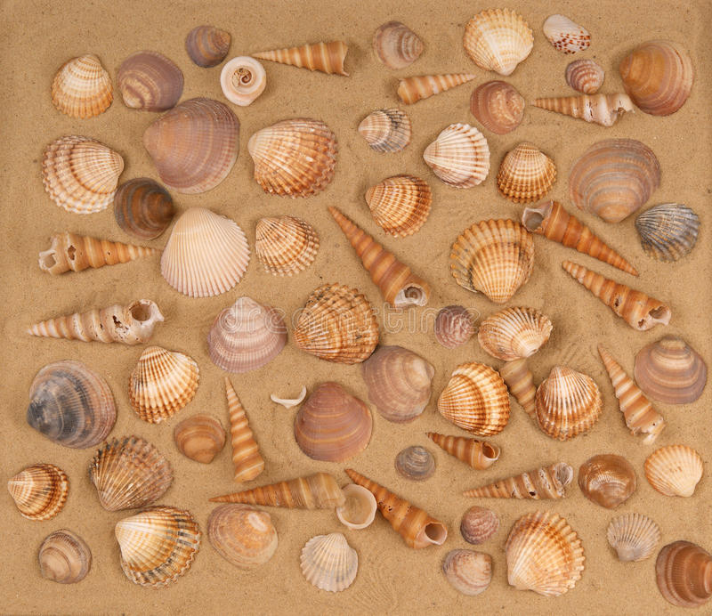 Grands seashells sur le sable image stock