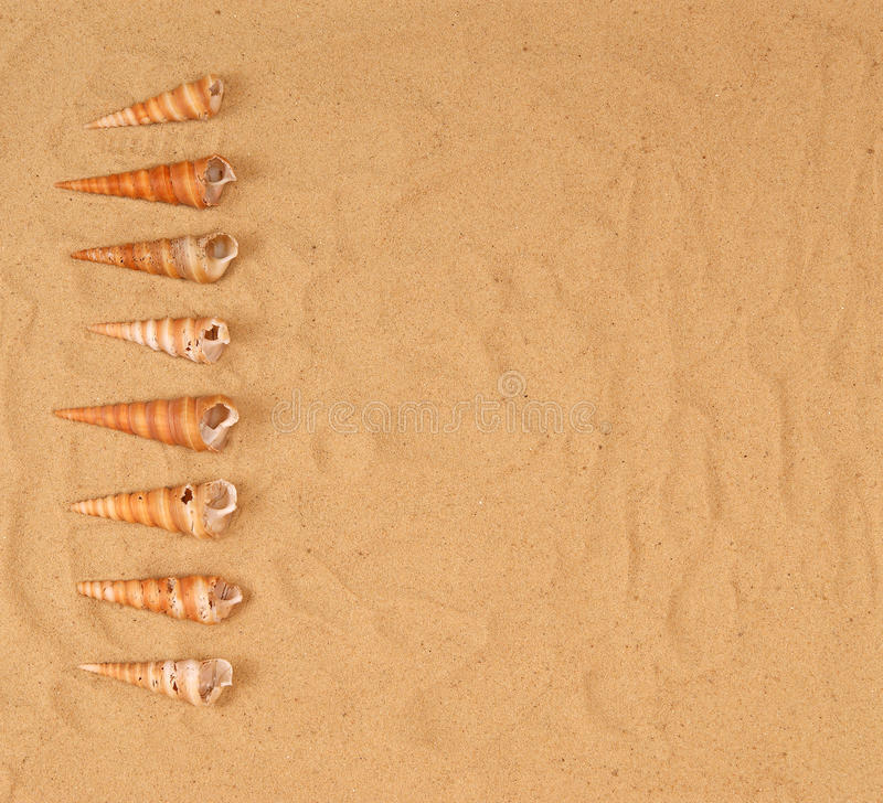 Grands seashells sur le sable image libre de droits