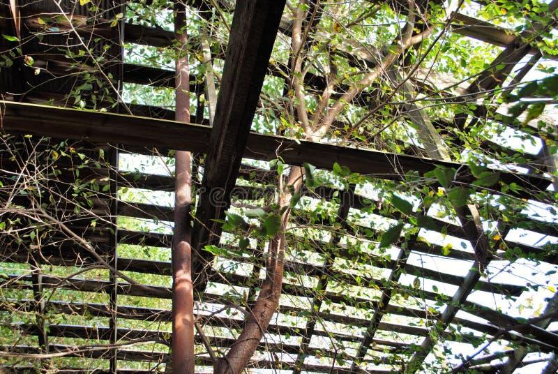 Granero abandonado viejo en el bosque con un árbol que crece a través del tejado foto de archivo libre de regalías