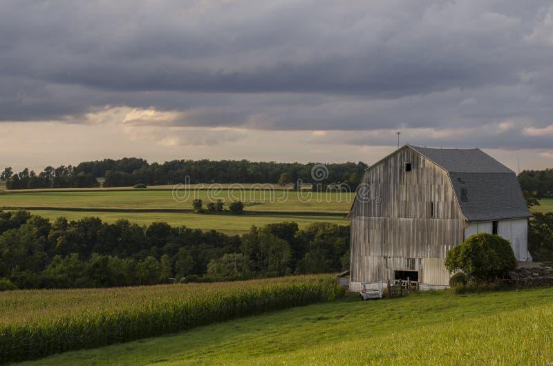 Granero blanco con el campo de maíz imagen de archivo