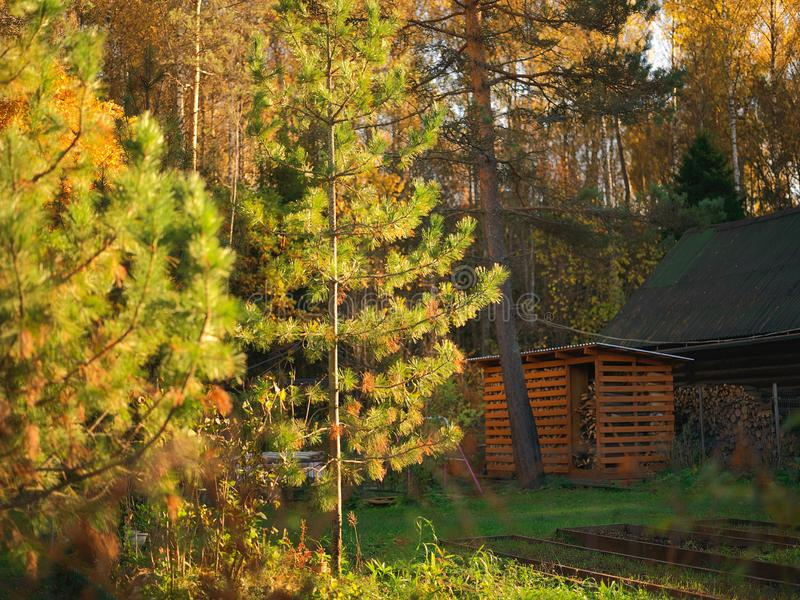 Granero de madera en bosque fotos de archivo libres de regalías