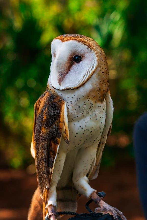 Granero Owl Looking al lado foto de archivo libre de regalías