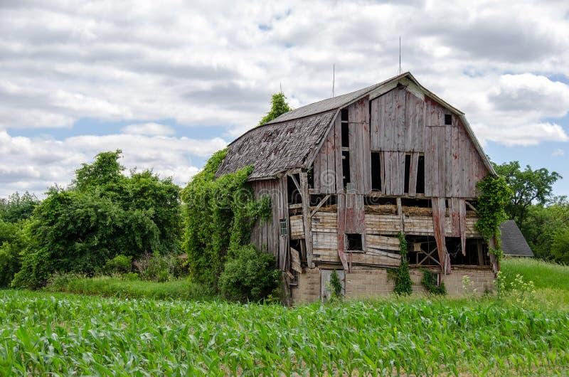 Granero resistido de Michigan en campo de maíz imagen de archivo libre de regalías