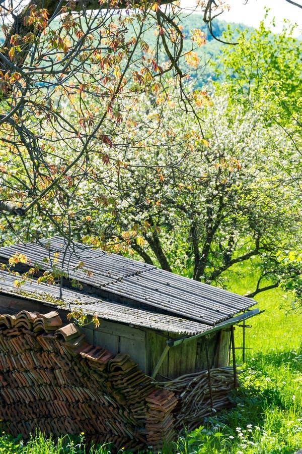 Granero viejo en un jardín denso imágenes de archivo libres de regalías
