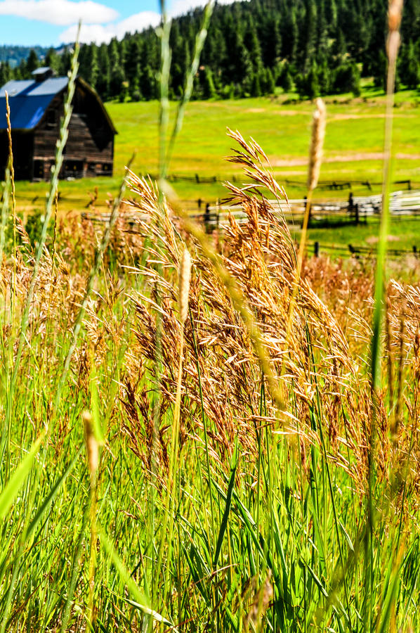 Granero viejo en un prado foto de archivo
