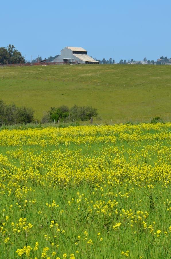 Granero y wildflowers en prado imágenes de archivo libres de regalías