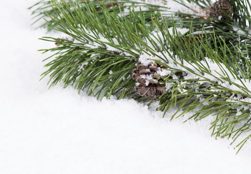 Granfilialen med snö och sörjer kotten arkivfoto