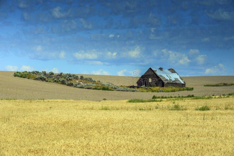 Grange dans des domaines de blé sur la route 2 près de Waterville, WA photo libre de droits