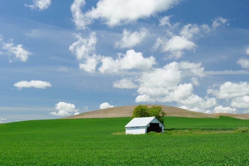 Grange dans le domaine de blé image stock