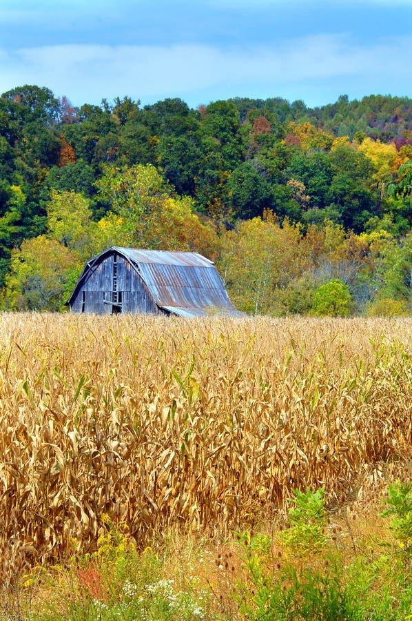 Grange et champ de maïs photographie stock