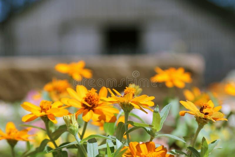 Grange et fleurs photographie stock