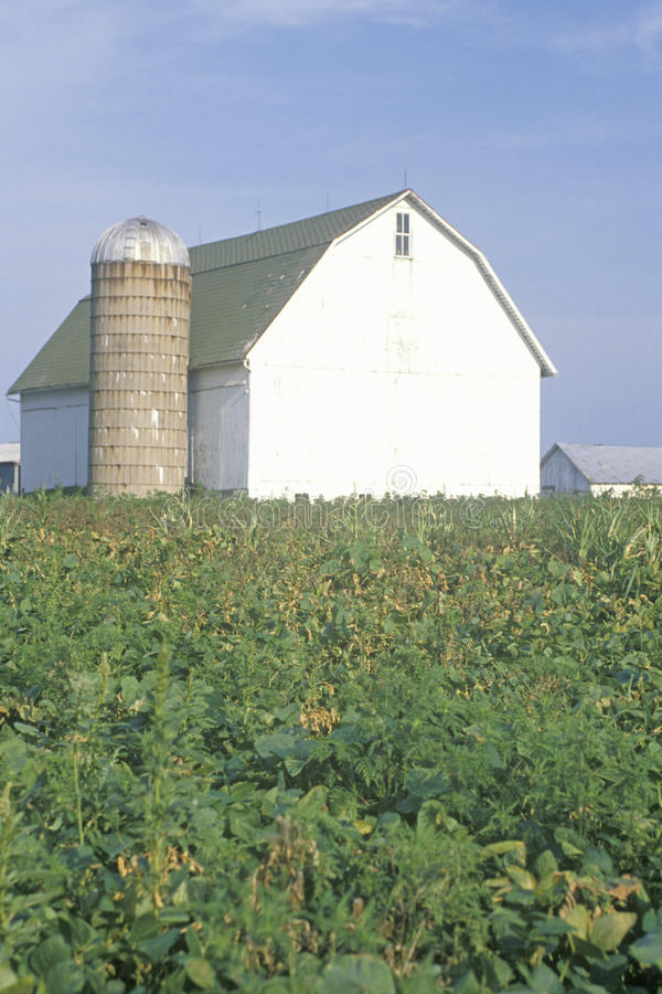Grange et silo au milieu de la zone de maïs photographie stock