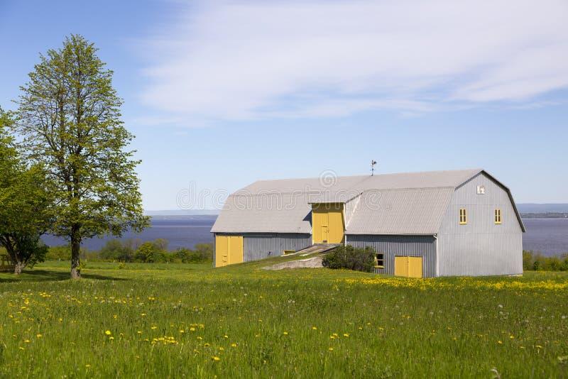 Grange plaquée de métal avec les portes jaunes et les châssis de fenêtre réglés dans le domaine couvert en pissenlit en fleur image libre de droits