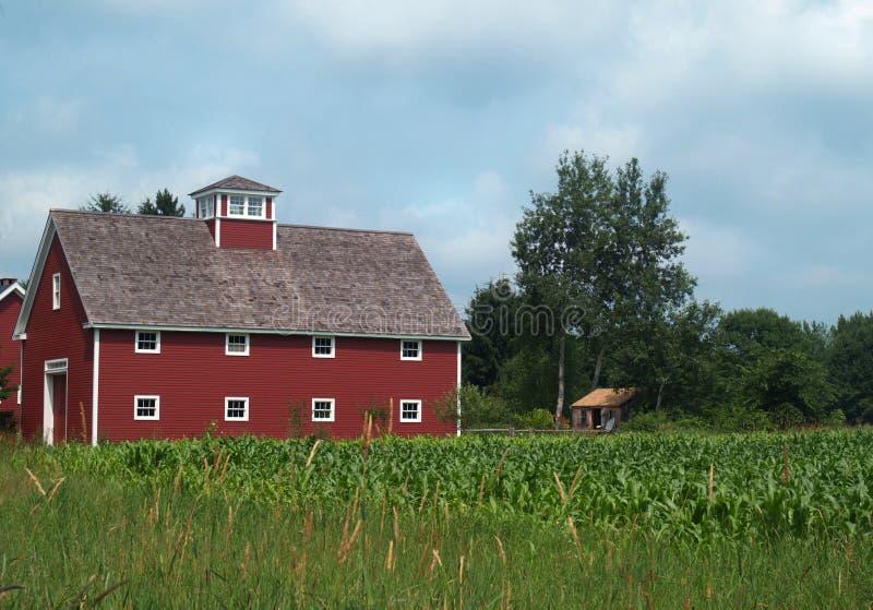 Grange rouge avec le champ de maïs photo stock