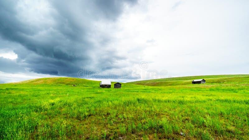 Granges dans les terres d'herbe de Nicola Valley en Colombie-Britannique, Canada photos stock