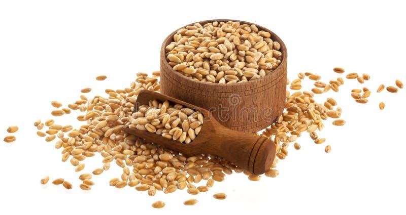 Grani del grano in ciotola di legno con il mestolo isolato su fondo bianco fotografie stock