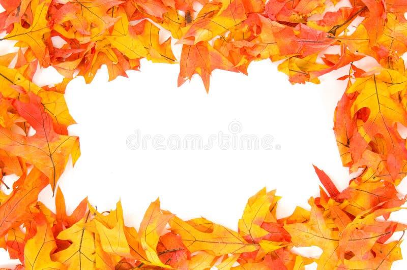 granic upadku liści jesienią fotografia royalty free