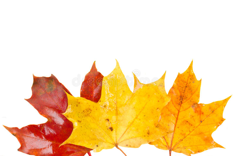 Granica kolor żółty, pomarańcze i czerwoni spadków liście, obraz royalty free