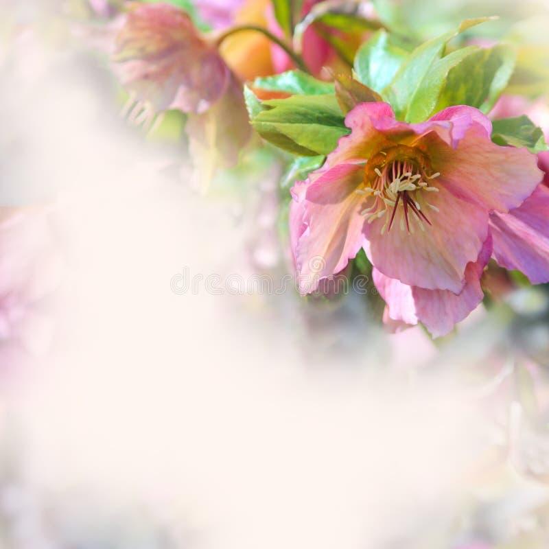 Granica kwiaty fotografia stock