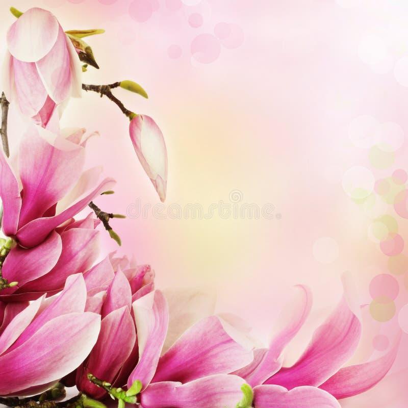 granica kwitnie magnoliową wiosna zdjęcie stock