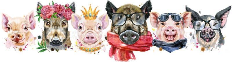 Granica od świni Akwarela portrety świnie i knury ilustracji