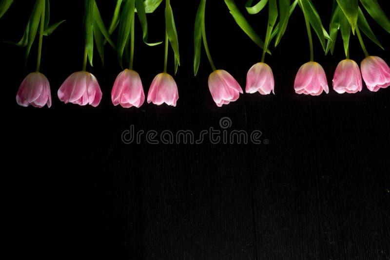 Granica od jaskrawych różowych tulipanów kwitnie na czarnym drewnianym backgroun fotografia royalty free