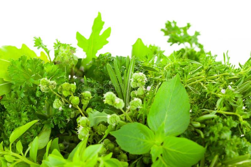 Granica Różni Świezi pikantność ziele nad białym tłem fotografia stock