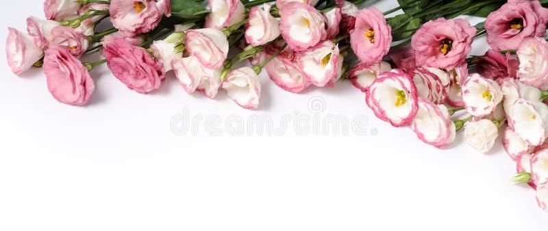 Granica różowi kwiaty obrazy royalty free