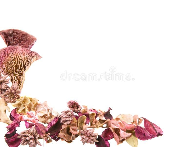 granica suszący kwiatu liść potpourri zdjęcia stock
