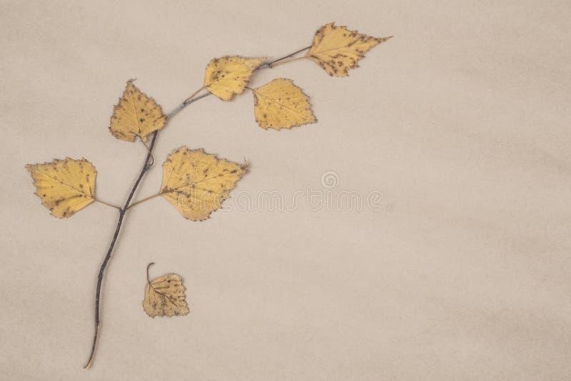 Granica z wysuszonymi jesień liśćmi obrazy stock