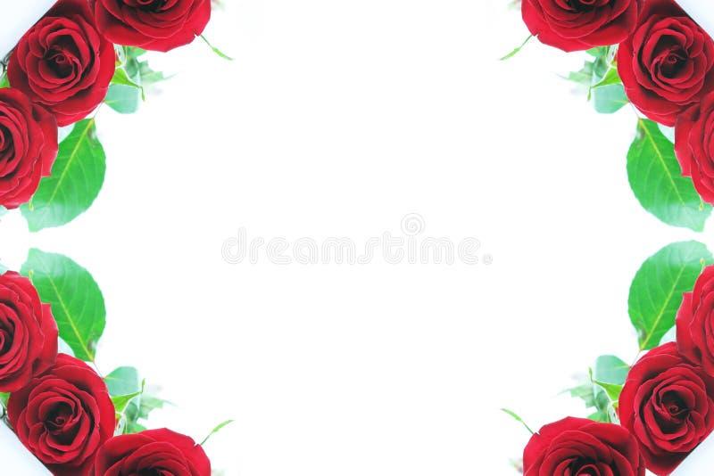 granice są otoczeni czerwoną różę ilustracja wektor